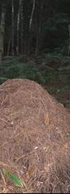 Ungewöhnliche Anwendung Geophysik - Wanderung von Ameisenhaufen